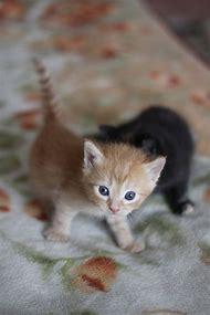 Super Cute Baby Kittens