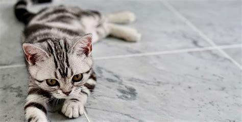 cute overload  super cute kitten names