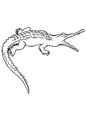 ausmalbilder zuschnappendes krokodil krokodile malvorlagen