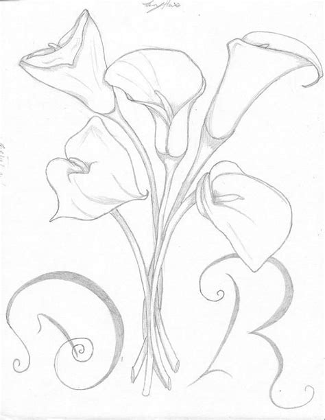 Calla Lily Drawing | Calla Lily Pencil Sketch Drawing Image Imagetrailnet Pictures | Sketches