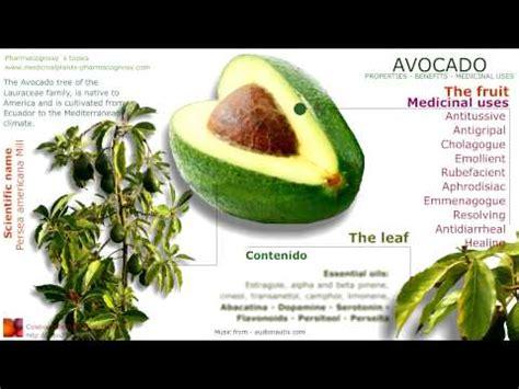 avocado meaning in marathi recipe