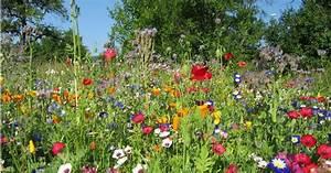 Wiese Mit Blumen : eine einj hrige blumenwiese entsteht biogarten f llhorn ~ Watch28wear.com Haus und Dekorationen