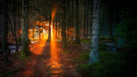 light for the day last light of the day by emmmbeee on deviantart