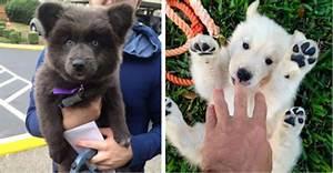 15+ Dogs That Look Like Teddy Bears