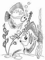 Pages Fish Coloring Aquarium Colouring раскраски для детей Mycoloring Tropical Printable Ocean Colorful sketch template