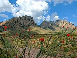 Ocotillo And Organ Mountains   Photos  Diagrams  U0026 Topos   Summitpost