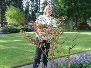Comment Tailler Les Rosiers : comment tailler des rosiers ~ Nature-et-papiers.com Idées de Décoration