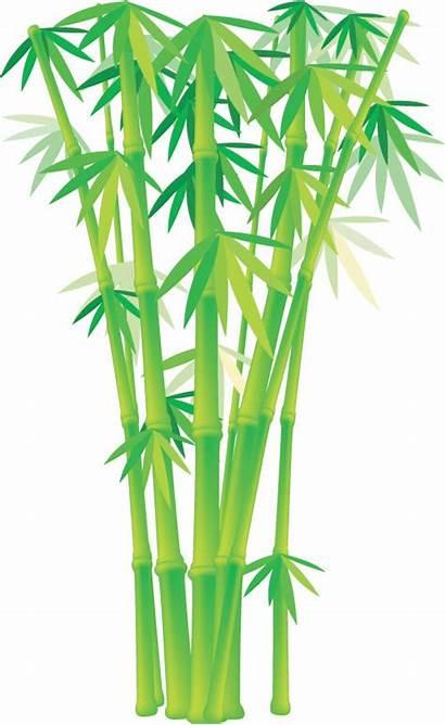 Bamboo Vector Grass Plant Clip Clipart 4vector