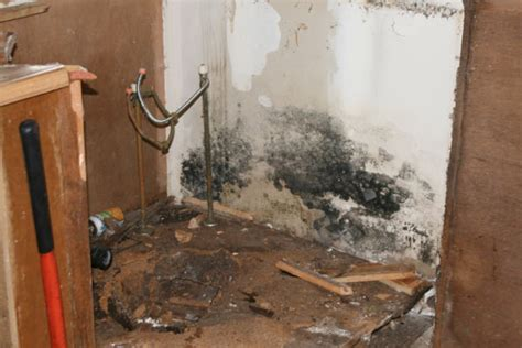 black mold in kitchen cabinets mold lead asbestos services norcal disaster 7893