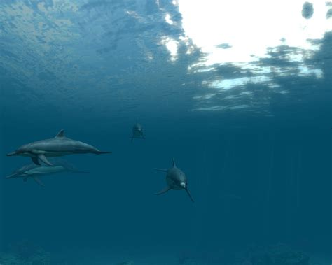 Dolphins 3d Screensaver And Animated Wallpaper - free animated dolphin screensavers wallpaper wallpapersafari