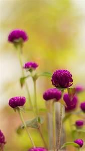 Colorful purple flower HD Wallpaper iPhone 6 plus ...