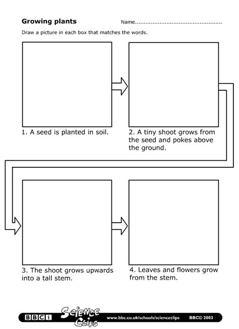 plant cycle worksheet schools science