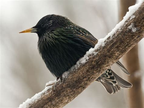 pictures   beautiful birds   world inspiringmesh