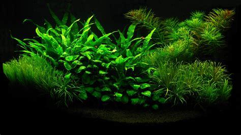 Create Animated Wallpaper - animated fish aquarium desktop wallpapers wallpapersafari