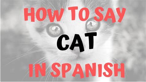 cat in spanish female