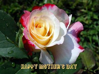 Mothers Happy Wishes Rose Christian Flower Wallpapers