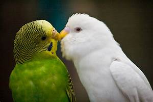 Beautiful love birds wallpapers |Funny Animal