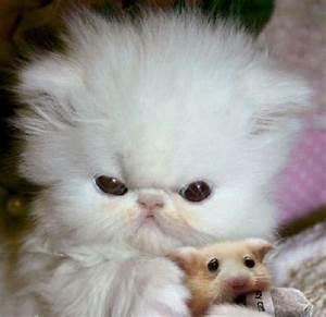 Super Cute Baby Kittens Cats are soooo cute! | Cute Cats ...