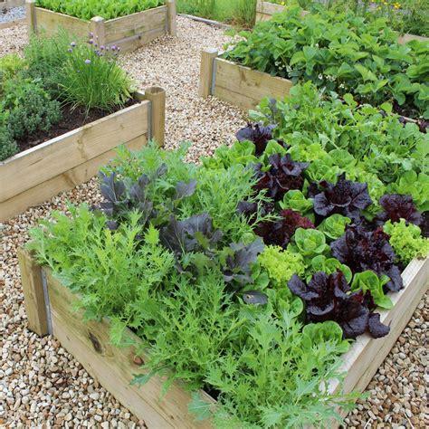 vegetable garden plans  beginners  healthy crops
