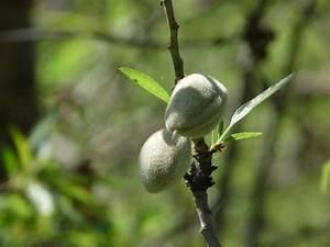 Baum Mit Langen Schoten : pflanzen am mittelmeer und auf den kanaren ~ Lizthompson.info Haus und Dekorationen