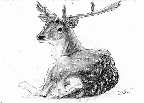pencil drawings pencil drawing deer