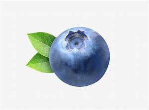 blueberry, Fruit, Blue PNG Image and Clipart for Free Download