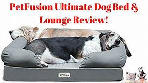 the ultimate large dog bed bean bags r us america dog beds With bedlounge reviews