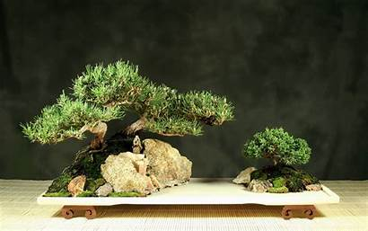 Bonsai Tree Wallpapers Desktop Penjing Backgrounds Zen