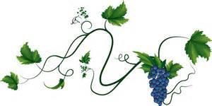 Résultat d'images pour image vigne raisin