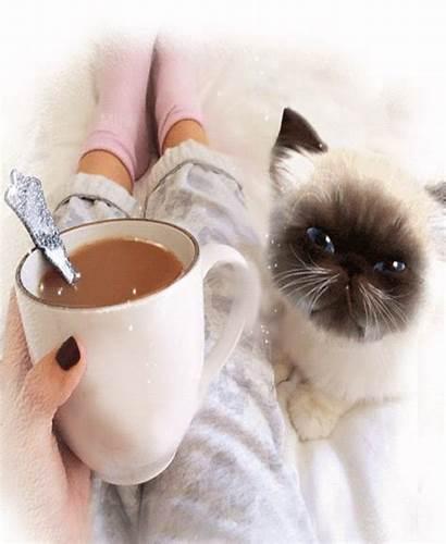 Coffee Morning Cup Kitty Night Hello Looks