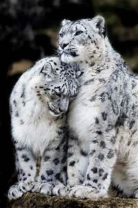 TOP 10 Emotional photos of animals | Photos Of Animals ...