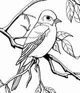 Mockingbird Coloring Pages Eye Patagonian Drawing Eyeball Staring Flower Drawings Garden Printable Getcolorings Getdrawings Colorluna 699px 9kb sketch template