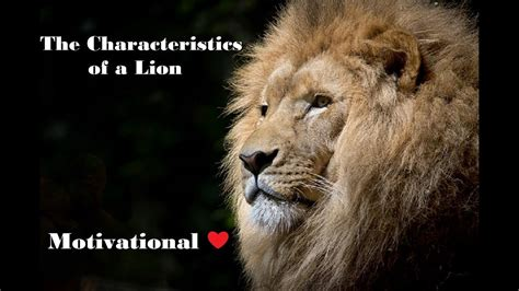 characteristics   lion motivational lion