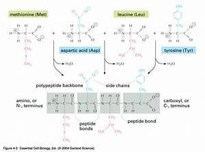 Csir Life Science Preparation  Proteins