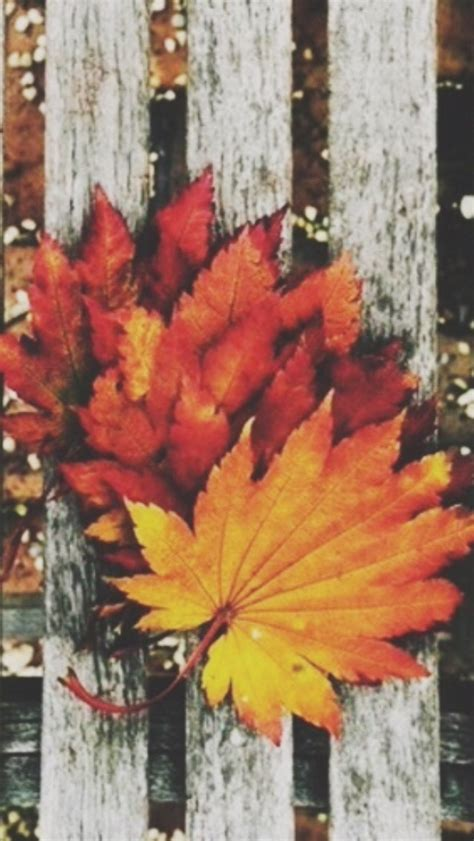 Aesthetic Autumn Laptop Wallpapers by