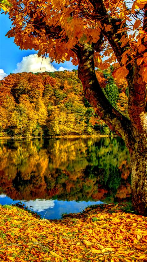 Autumn Wallpapers For Iphone by Autumn Trees Iphone Wallpaper Hd