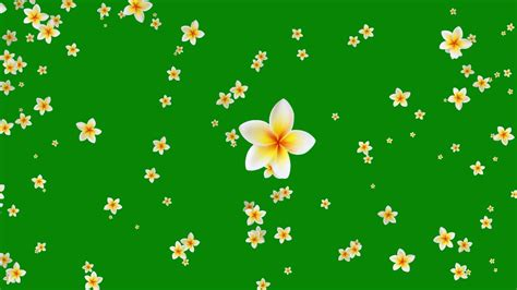 flower green background video effects hd youtube