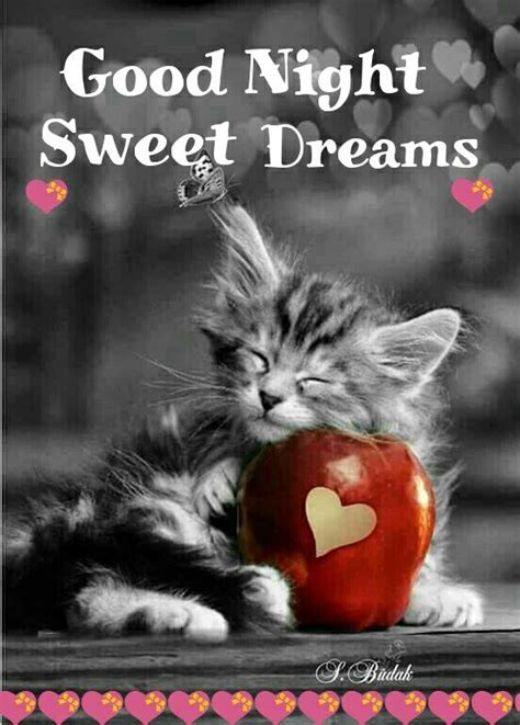 goodnight sister sweet dreams schoenen katzen
