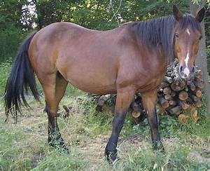 Horses PetMapz