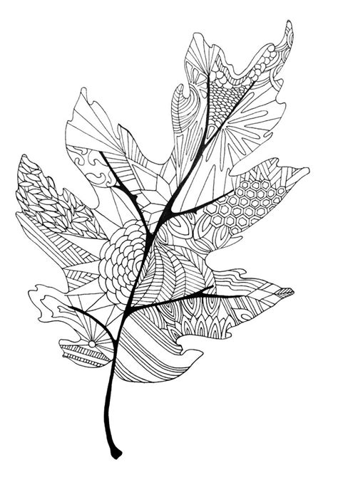 leaf coloring pages coloring in the lines fall leaves leaves and coloring