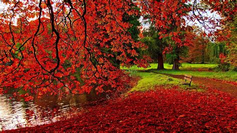 Autumn Wallpapers Widescreen by Autumn Wallpapers 1920x1080 Wallpaper Cave