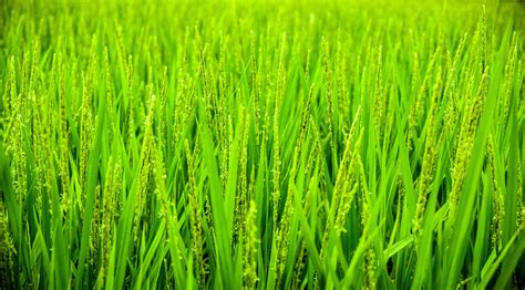 green grass  water droplets  stock photo
