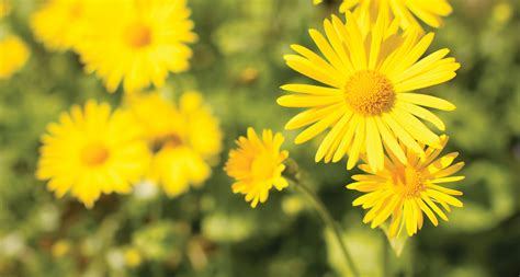 types  yellow flowers proflowers blog