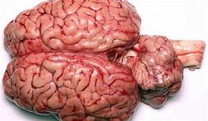 Usamos apenas 10% do cérebro: mito ou realidade?