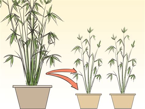 how to care for an indoor bamboo plant 8 steps wikihow