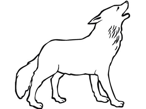 drawn howling wolf traceable pencil   color drawn howling wolf traceable