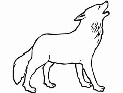 Template Wolf Drawing Howling Outline Easy Simple
