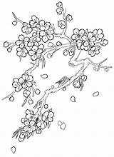 Blossom Cherry Tree Coloring Drawing Flower Tattoo Step Blossoms Trees Japanese Drawings Pages Sketch Flowers Pencil Draw Outline Printable Winter sketch template