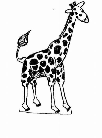 Giraffe Coloring Printable Ausmalbilder Zirafah Animal Colouring