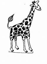 Giraffe Coloring Pages Printable Cartoon Animal Animals Clip Getcoloringpages African Bestcoloringpagesforkids sketch template